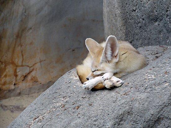 Fennec Fox  by Robert Meyers-Lussier