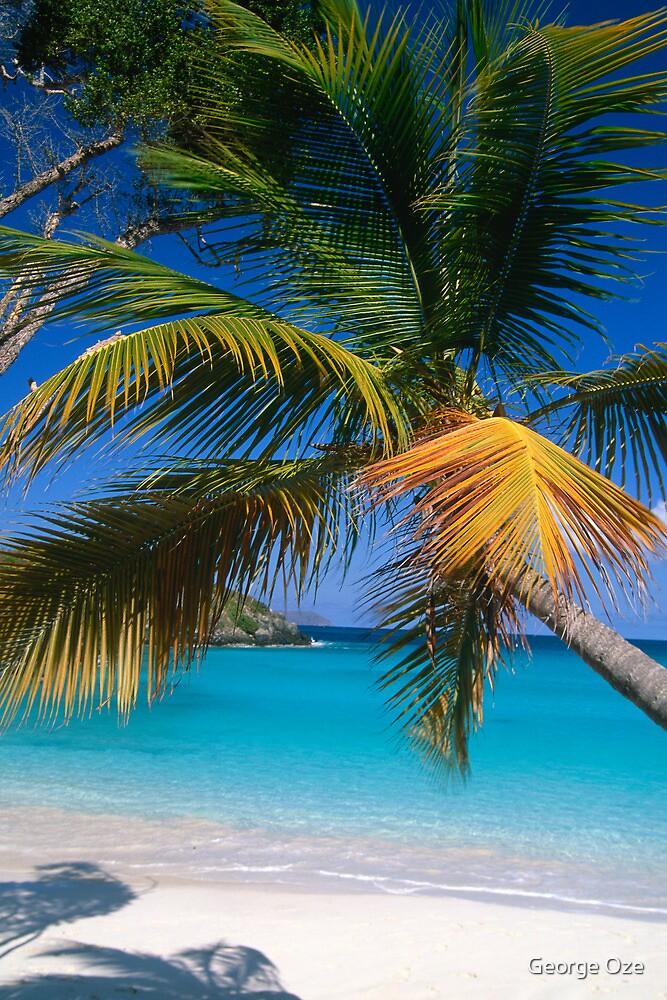 Virgin Island Palm Tree by George Oze