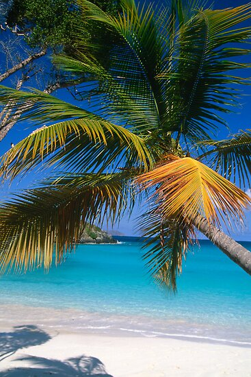 Virgin Island Palm Tree by George Oze