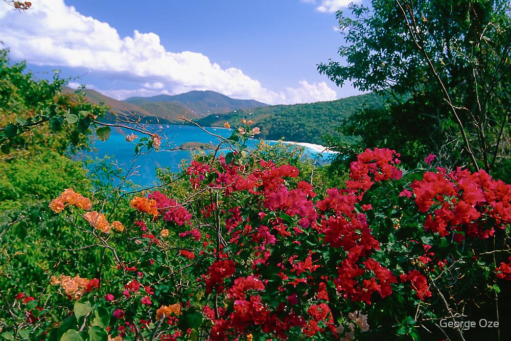 Tropical Flower of Virgin Islands by George Oze