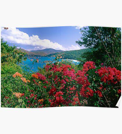 Tropical Flower of Virgin Islands Poster