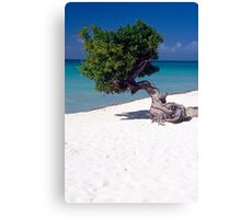 Lone Tree on a Beach Canvas Print