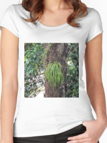 Epiphyte growth on tree near Kuranda Women's Fitted Scoop T-Shirt