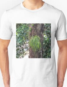 Epiphyte growth on tree near Kuranda T-Shirt