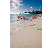 Flamingos on a Beach Photographic Print