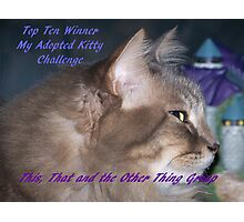 Banner for Top Ten Winner - My Adopted Kitty Photographic Print
