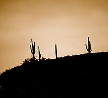 Arizona Cactus by ADayToRemember