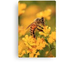 Honeybee On Goldenrod ~ Canvas Print