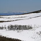 Snow on Peterson Mountain,Reno NV USA by Anthony & Nancy  Leake