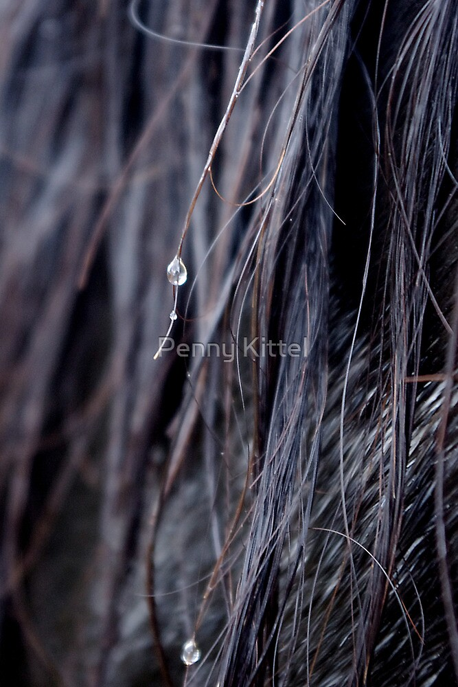 Drops of equine by Penny Kittel
