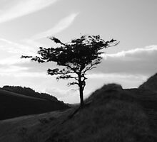 Tree in Peak District by PMJCards