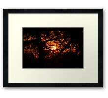 Sunset Through Conifer Framed Print