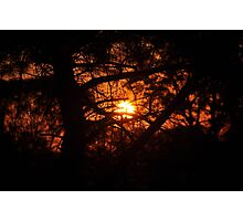 Sunset Through Conifer Photographic Print