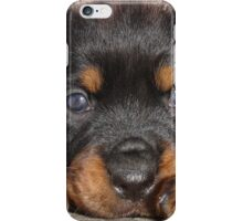 Female Rottweiler Puppy, Head Resting Between Paws iPhone Case/Skin