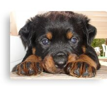 Female Rottweiler Puppy, Head Resting Between Paws Canvas Print