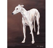 White greyhound Photographic Print