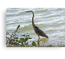 Wading Great Blue Heron Metal Print