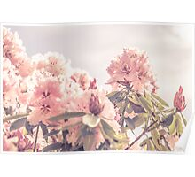 Rhododendron Poster