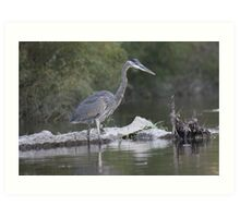 Great Blue Heron on Milwaukee River Art Print