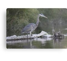 Great Blue Heron on Milwaukee River Metal Print
