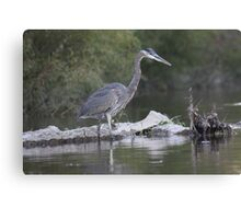 Great Blue Heron on Milwaukee River Canvas Print