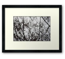Sandhill Cranes in Whitefish Bay Wisconsin Framed Print