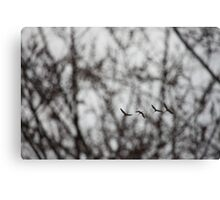 Sandhill Cranes in Whitefish Bay Wisconsin Canvas Print