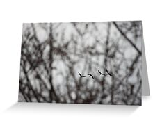 Sandhill Cranes in Whitefish Bay Wisconsin Greeting Card