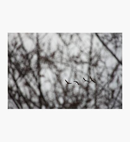 Sandhill Cranes in Whitefish Bay Wisconsin Photographic Print