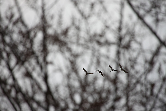 Sandhill Cranes in Whitefish Bay Wisconsin by Thomas Murphy