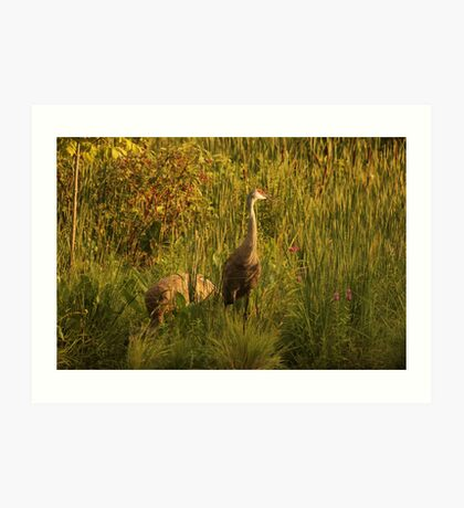 Sandhill Cranes on shore of Lake Art Print