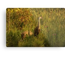 Sandhill Cranes on shore of Lake Metal Print