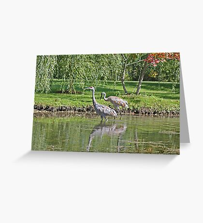 Sandhill Cranes Wading in Shallows Greeting Card