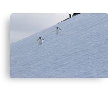 Penguin 015 Canvas Print