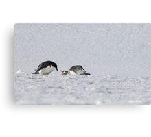 Penguin 018 Canvas Print