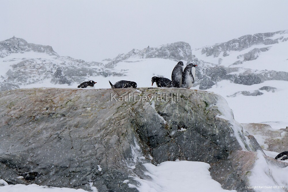 Penguin 020 by Karl David Hill