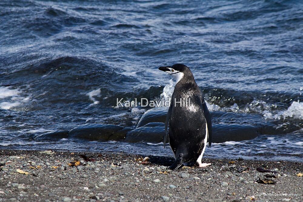 Penguin 021 by Karl David Hill