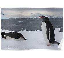 Penguin 024 Poster