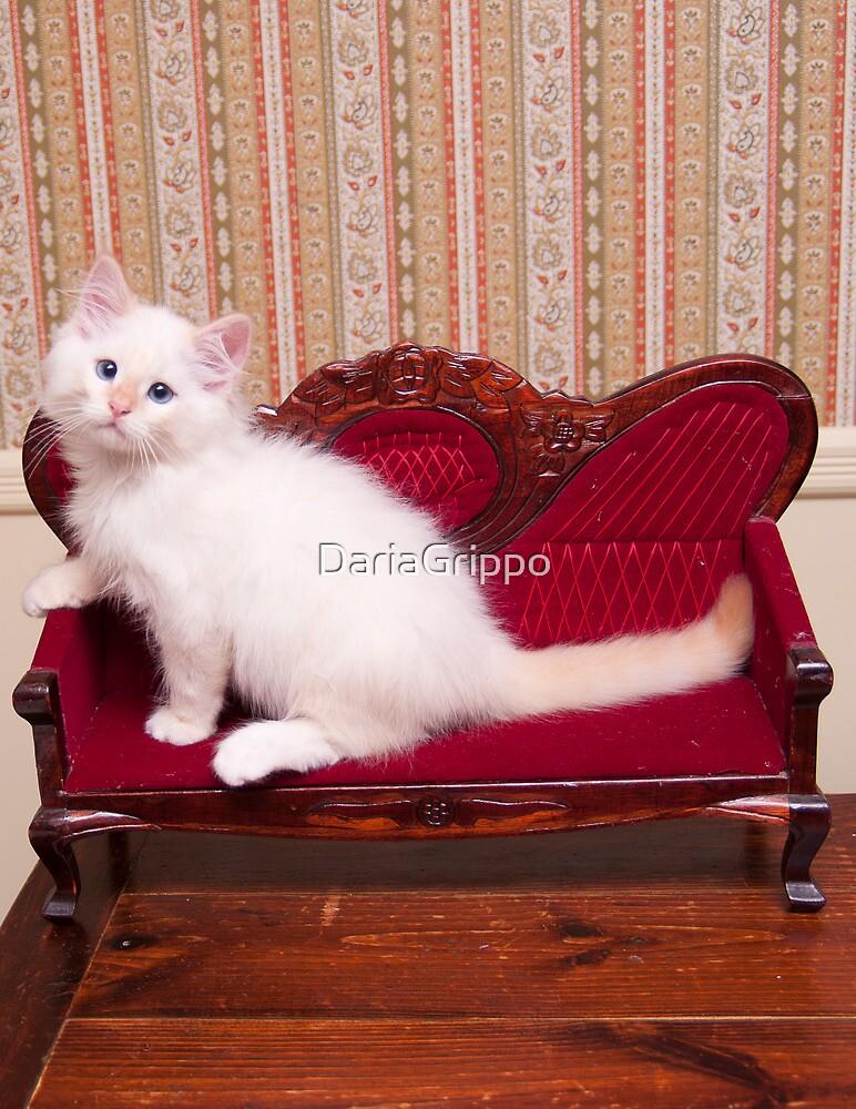 White Flamepoint Ragdoll Kitten on Queen Anne Sofa by DariaGrippo