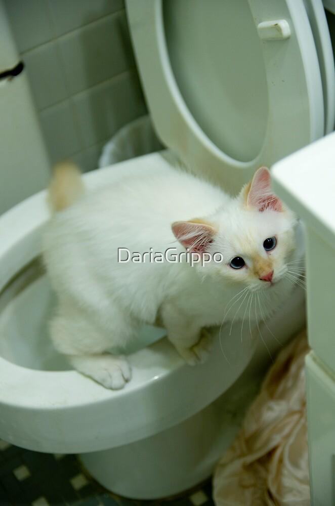 Ragdoll Kitten using the toilet by DariaGrippo