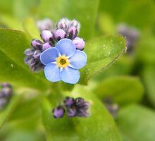 Little Blue by ElsT