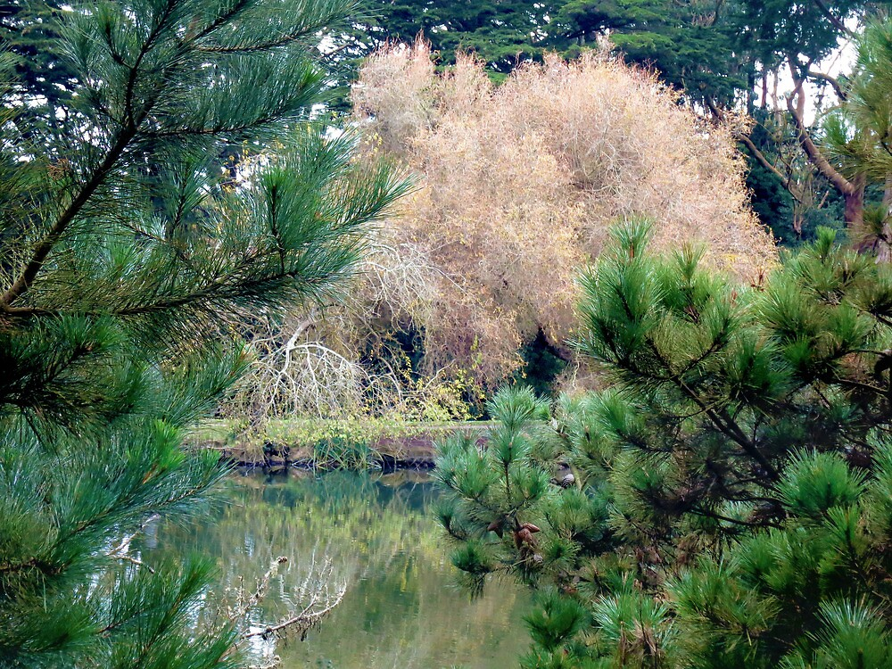 Stow Lake Winter Time by David Denny
