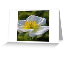 Poppy after rainfall Greeting Card