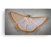Geometer moth Canvas Print