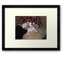 jack russel with raindeer ears on Framed Print