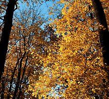 Autumn Scenery by Artur Bogacki