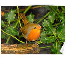 Little Robin Red Breast Poster
