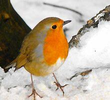 Winter Snow Robin by kelly-m-wall