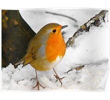 Winter Snow Robin Poster