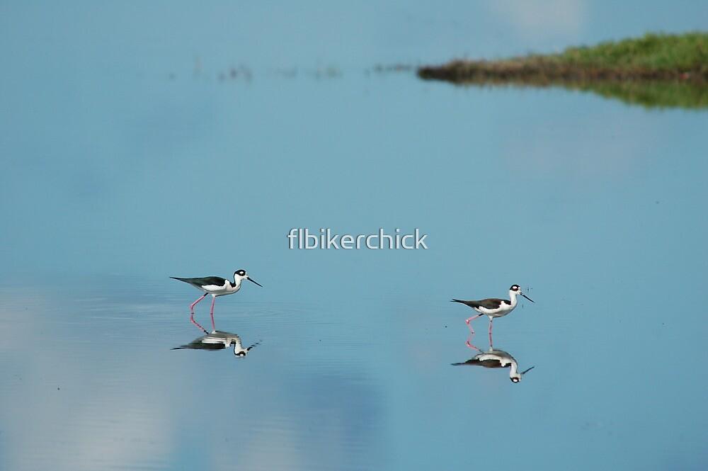 Black Necked Stilts - MINWR by flbikerchick